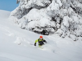 Freeride skiier riding in deep powder snow_shutterstock_556667950.jpg