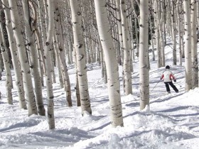 Steamboat_Colorado_Steamboat_Springs_Treeskiing_46041883-1024x768-ae8c260bed.jpg